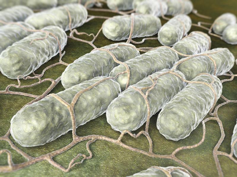 Salmonella /©123RF/PICSEL