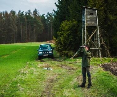 Sam dodatek funkcyjny u leśnika to nawet 5,8 tys. zł miesięcznie! Tak płacą Lasy Państwowe