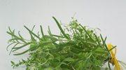Sama stwórz ziołową apteczkę