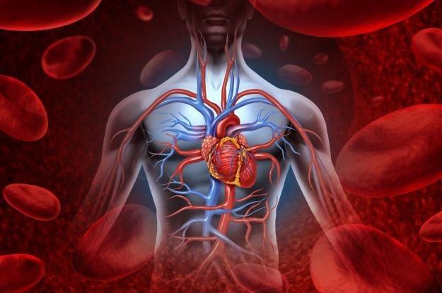 Samo bicie serca może zasilać rozrusznik /123RF/PICSEL