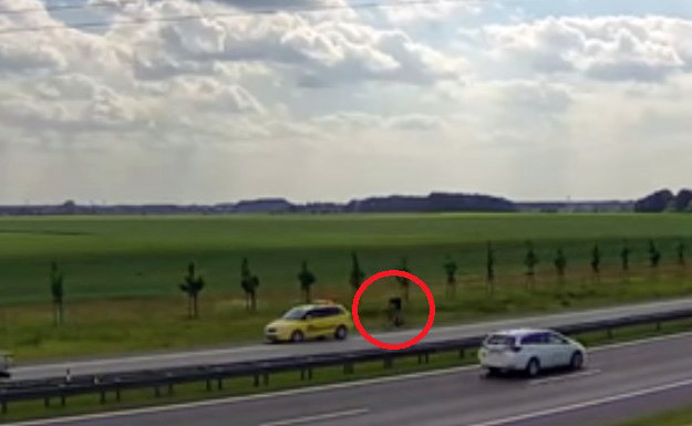 Samochód zatrzymał się tuż przed, zapewne szybko jadącym, rowerzystą /