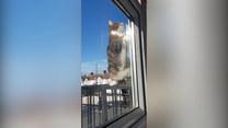 Samodzielna kotka. Sprawna akrobatka