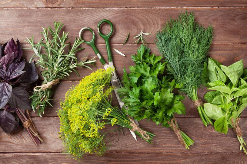 Samodzielnie wyhodowane zioła są wyśmienitym dodatkiem do dań /materiały prasowe