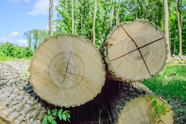 Samorządowcy chcą zmiany przepisów o wycince drzew /©123RF/PICSEL