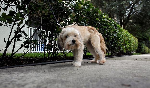 Samorządy mają problem z bezpańskimi psami /AFP