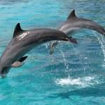 Sargasuum - pierwsze słowo usłyszane od delfinów