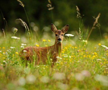 Sarny w ogrodzie: Skuteczne sposoby odstraszania