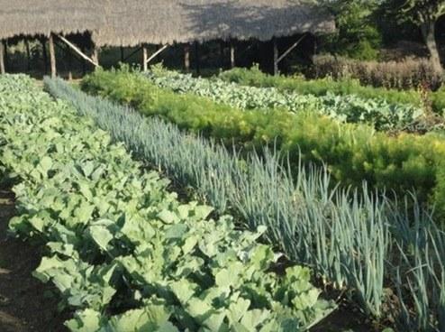 sąsiedztwo roślin warzywnych /© Photogenica