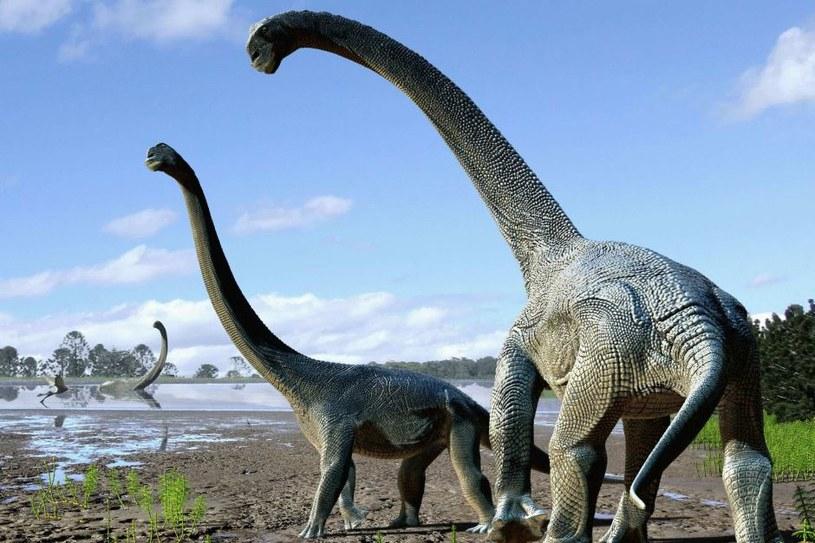 Savannasaurus elliottorum - nowo odkryty gatunek tytanozaurów /materiały prasowe