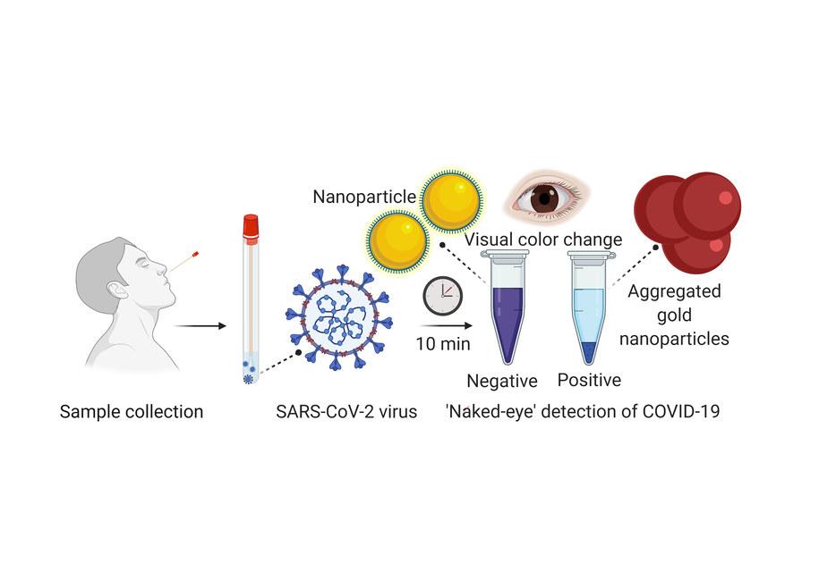 Schemat nowego testu SARS-CoV-2 /University of Maryland School of Medicine /Materiały prasowe