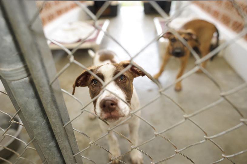 Schroniska dla zwierząt są zamknięte, ale w niektórych można dokonać adopcji /123RF/PICSEL