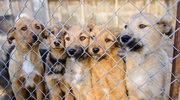 Schroniska dla zwierząt są zamknięte, ale w niektórych można dokonać adopcji