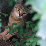 Schronisko dla zwierząt zapomniało o kotach. W samochodzie spędziły 22 dni