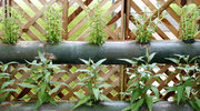 Ściana zieleni