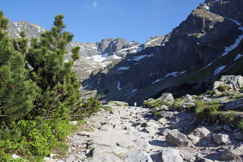 Ścieżka kamienna w Tatrach /123RF/PICSEL