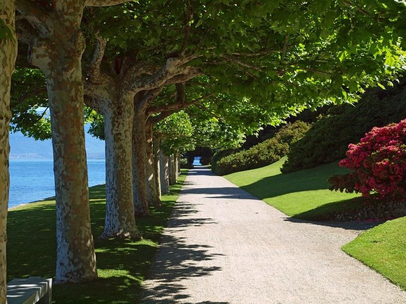 Ścieżki wzdłuż brzegu jeziora Como /123RF/PICSEL