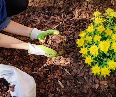 Ściółka ogrodowa: Co trzeba o niej wiedzieć?