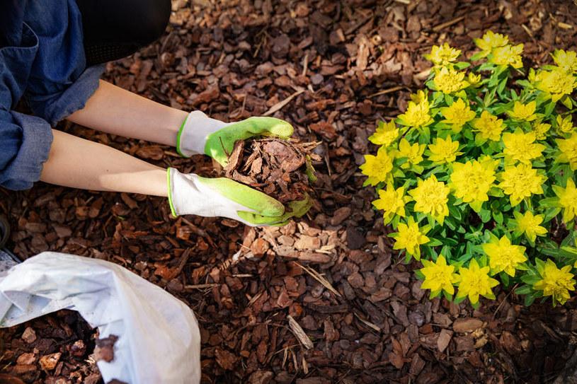 Ściółka ogrodowa zapobiegnie wysuszaniu podłoża /123RF/PICSEL