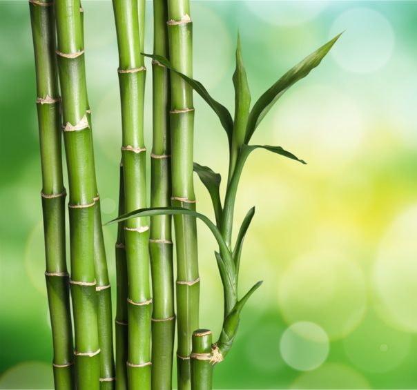 Segmenty bambusa /©123RF/PICSEL