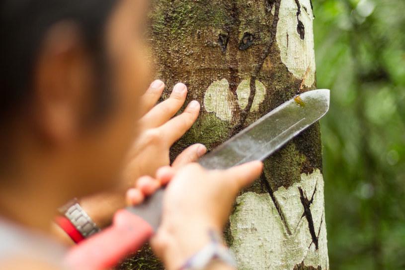 Sekret plemion Amazonii /©123RF/PICSEL