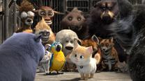 """""""Sekretny świat kotów"""" [trailer]"""