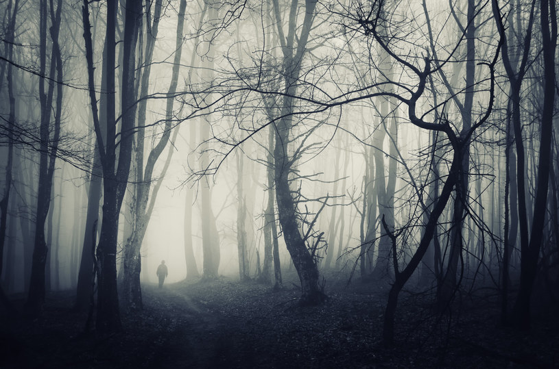 Sen o wejściu w mroczny las, z którego nie można się wydostać, jest ostrzeżeniem /123RF/PICSEL