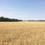 Sensacyjne znalezisko pod Łysomicami. Odkryto rondele sprzed 7 tys. lat