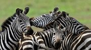 "Serengeti - tanzański ""ostatni Eden"""