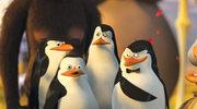 """Serial o pingwinach z """"Madagaskaru"""""""