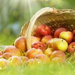Serowe placki z musem jabłkowym i cynamonem