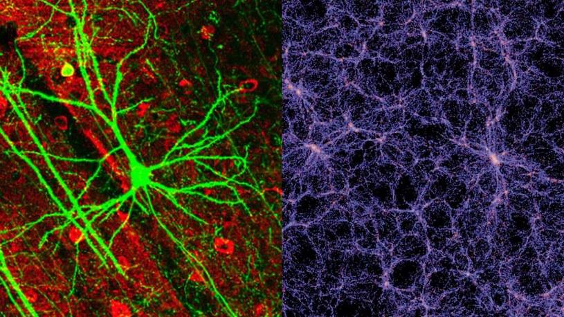 Sieć neuronów i kosmiczna sieć są do siebie podobne /materiały prasowe