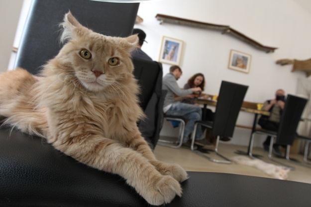 Sieć neuronowa Google nauczyła się rozpoznawać koty /AFP