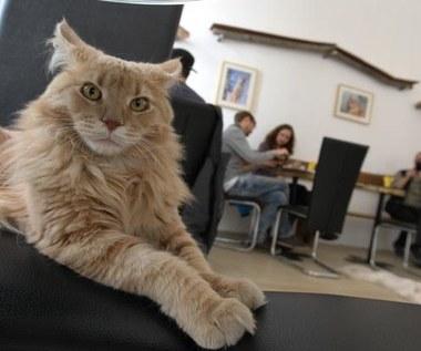Sieć neuronowa Google zapatrzona w koty