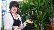 Siedem błędów, jakie popełniamy przy uprawie palm