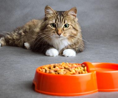 Siedem błędów popełnianych przy karmieniu kota
