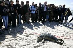 Siedem fok wpuszczono do Bałtyku