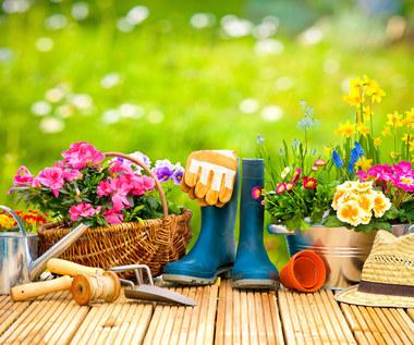 Siedem kardynalnych błędów początkującego ogrodnika. Zamienisz ogród w ruinę