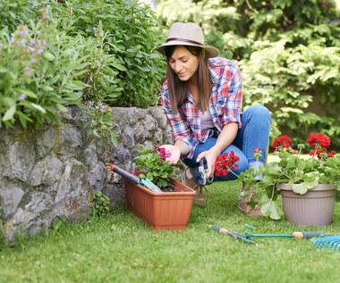 Siedem największych błędów, jakich trzeba unikać w ogrodzie latem