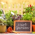 Siedem powodów, aby hodować rośliny w domu lub w biurze
