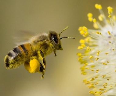 Siedem rzeczy, których nie wiesz o pszczołach, a powinnaś!