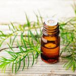Siedem zastosowań olejku z drzewa herbacianego