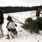 Siekiera przy pościeli, choinka ukradziona z czyjegoś lasu, czyli przesądy wigilijne po góralsku