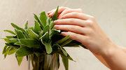 Siła szałwiowych liści