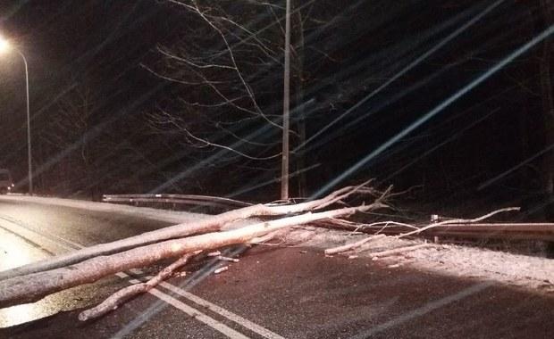 Silny wiatr na północy Polski: Przewrócone drzewa blokowały ulicę w Gdańsku