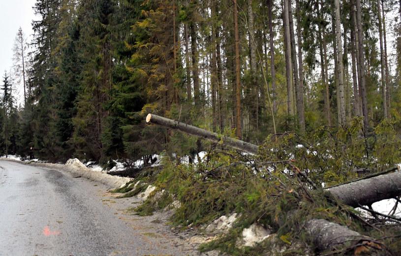 Silny wiatr utrzymuje się na południu Polski /Fot. Pawel Murzyn /East News