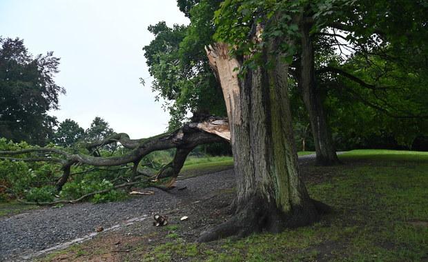 Silny wiatr w jedenastu województwach. IMGW ostrzega