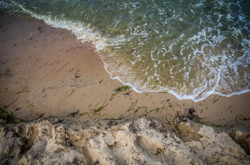 Sinice w Bałtyku, zdj. ilustracyjne /Karolina Misztal /Reporter