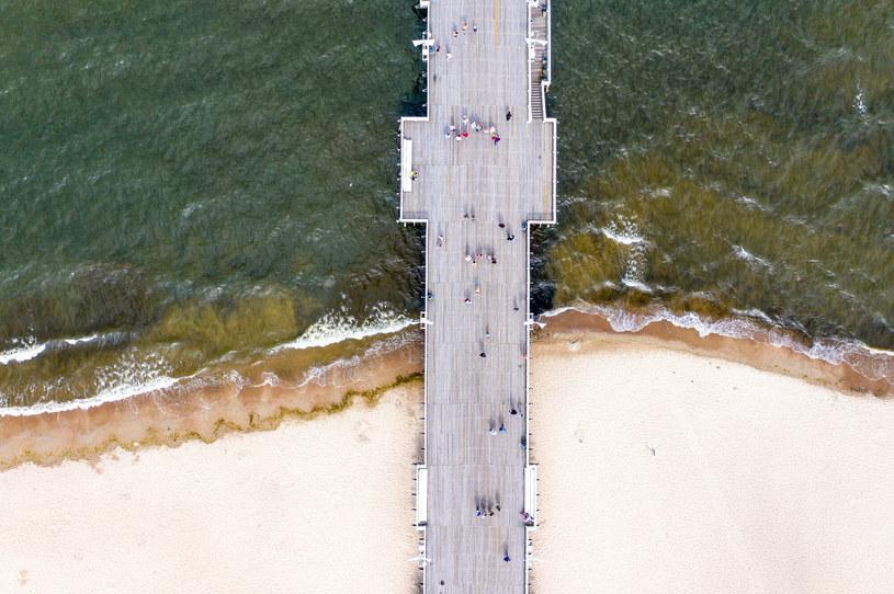 Sinice w Bałtyku, zdjęcie ilustracyjne /Przemek Swiderski/REPORTER /Reporter