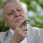 Sir David Attenborough będzie uczył dzieci w BBC