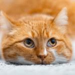 Skąd bierze się nadwaga u kota? Czym może grozić?